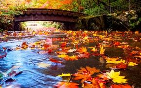 Picture autumn, leaves, trees, bridge, Park, stream, Japan