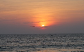 Picture the sun, sunset, birds, nature, the ocean, India