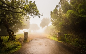 Picture road, trees, fog, garden, Olive