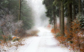 Picture road, forest, snow