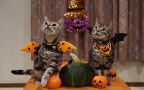 Picture holiday, cats, Halloween, melon