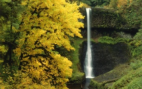 Wallpaper forest, trees, nature, waterfall, Autumn
