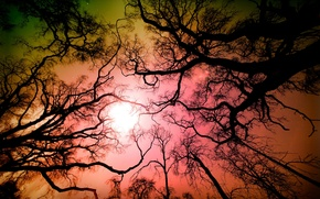 Picture forest, the sky, trees, branches, nature, CA, USA, Los Angeles, Angeles National Forest, Tujunga