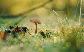 Wallpaper grass, Rosa, mushroom, moss, bokeh, fungus, Antonio Coelho