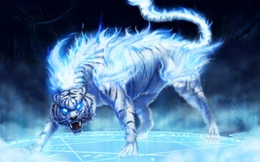Picture blue, tiger, fire