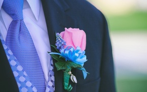 Picture flower, rose, tape, the groom