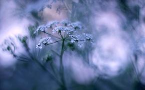 Picture grass, macro, flowers, bokeh