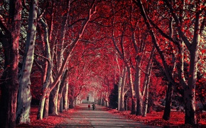 Wallpaper Park, autumn, nature