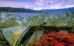 Wallpaper Washington, Flowers, Boat, Channel