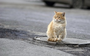 Picture cat, look, street