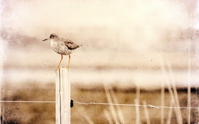 Picture style, bird, the fence