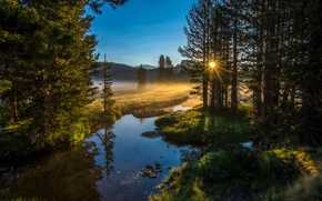 Picture forest, the sun, nature, river, morning