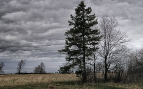 Wallpaper Tree, overcast, clouds