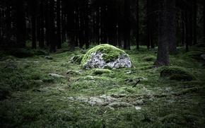 Wallpaper stone, magicstone, forest