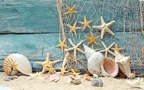 Picture sand, beach, tree, mesh, shell, wood, marine, stones, starfish, starfish, net, seashells