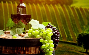 Picture leaves, landscape, wine, red, field, bottle, glasses, grapes, tube, barrel, plantation, bokeh