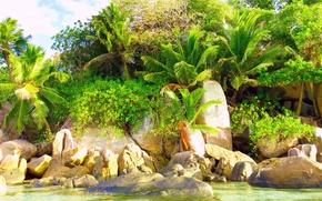 Picture nature, tropics, palm trees, exotic, Tropics nature
