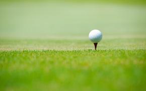Picture sport, green grass, Golf ball