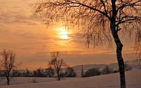 Picture winter, trees, sunset