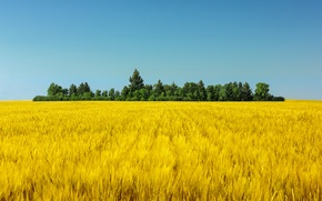 Picture the sky, trees, green, sky, trees, blue sky, blue sky, wheat, wheat, wheat field, field …
