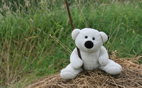 Picture grass, mood, toy, White, bear, hay, walk