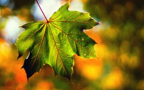 "Picture autumn, macro, light, sheet, bokeh, September, ""end of summer"""