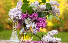 Picture bouquet, vase, lilac