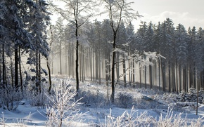 Picture winter, forest, landscape, nature
