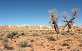 Picture trees, landscape, desert