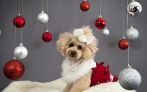 Picture balls, decoration, holiday, dog, New Year, Christmas, Christmas, New Year