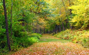 Picture forest, leaves, trees, Autumn, track, forest, falling leaves, trees, nature, yellow, yellow, autumn, leaves, path, …