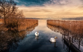 Picture the sky, lake, treatment, swans, Swan Lake