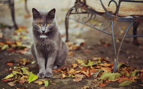 Picture cat, leaves, street
