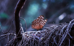 Wallpaper tree, Butterfly, forest, nature