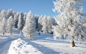 Picture winter, snow, trees, landscape, nature