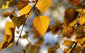Picture autumn, leaves, orange, yellow, sheet, mood, leaf, yellow, autumn, orange, gold