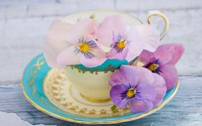 Wallpaper Cup, saucer, Pansy, Viola