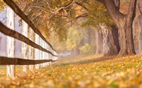 Wallpaper the fence, autumn, nature