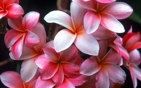 Wallpaper flowers, beauty, garden