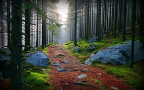 Picture road, forest, stones, of priod