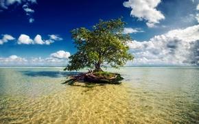 Picture sea, tree, Mexico, Mayan Riviera