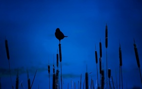 Picture night, bird, silhouette