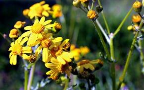 Picture field, purple, flowers, yellow, green, garden