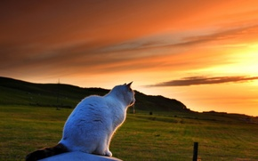 Picture cat, the sky, sunset, glade, beauty
