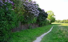 Picture greens, grass, trees, the fence, spring, Nature, flowering, path, trees, flowers, spring, path, flowering