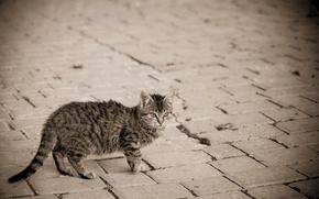 Picture cat, kitty, grey, street, bridge, striped
