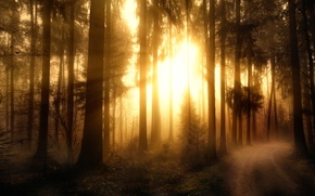 Picture forest, treatment, Misty Forest-2