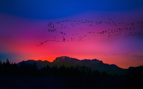 Picture the sky, mountains, birds, silhouette, glow