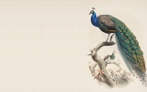 Picture bird, minimalism, branch, master, peacock, painting
