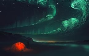 Picture night, lights, jellyfish, tent, art